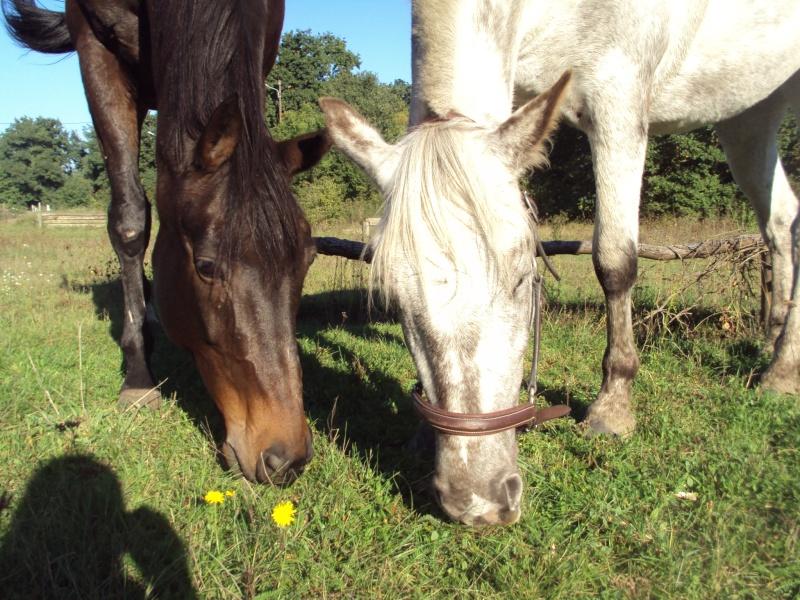 De l'herbe, du soleil et Tahiti Dsc05113