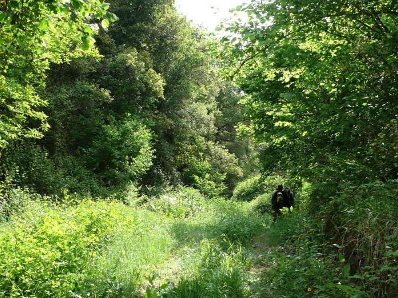 Camminos de monte 2011 1_610