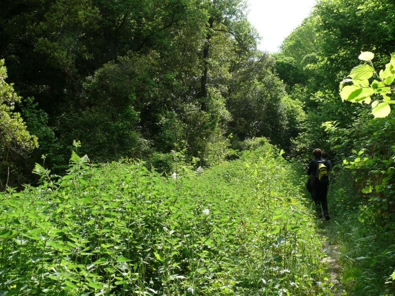 Camminos de monte 2011 1_710