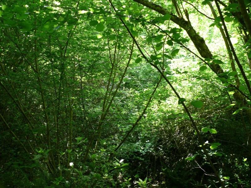 Camminos de monte 2011 1_810