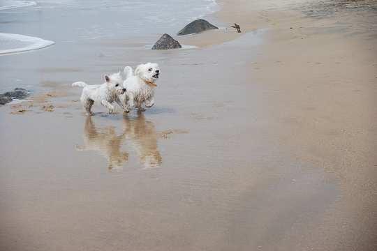 Belles images d'animaux Course10