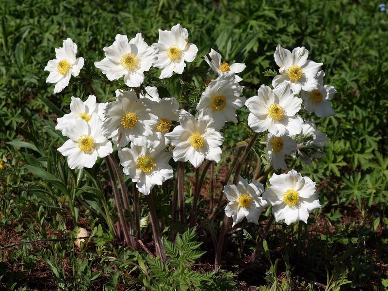 bouquet de printemps P5081410