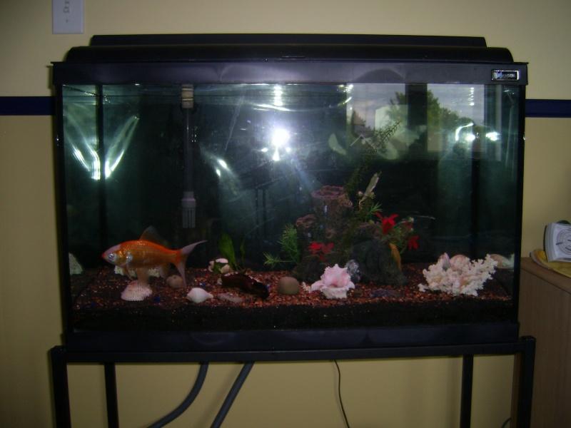 Besoin de votre avis sur poisson rouge standard dans un 115 litres. Sa402715