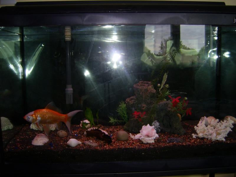 Besoin de votre avis sur poisson rouge standard dans un 115 litres. Sa402716
