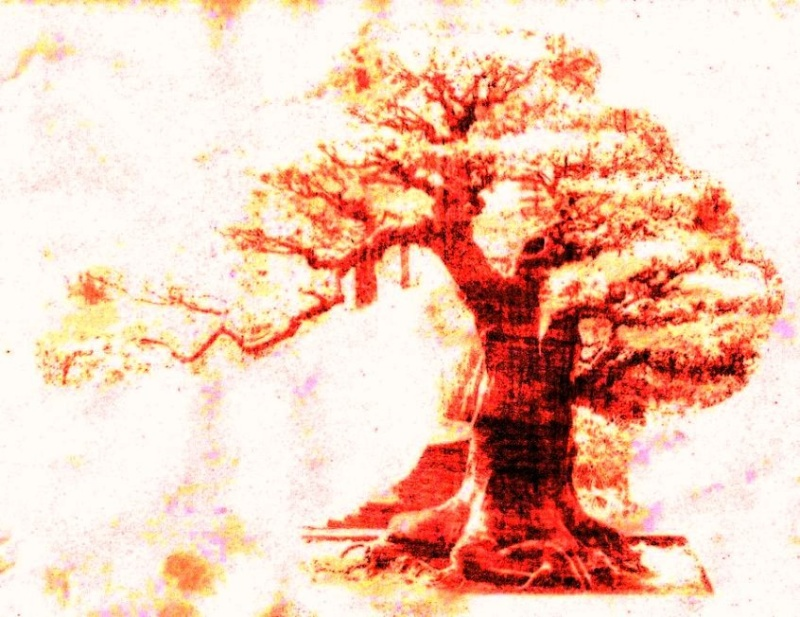 Requested - Edited Versions Bonsai11