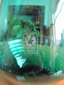 Vetreria Etrusca (Empoli) 00311