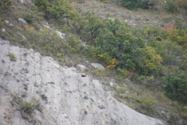 Mes sorties, Pirsch Affût  -  Saison de chasse 2010/2011 - Page 4 Dscf0913