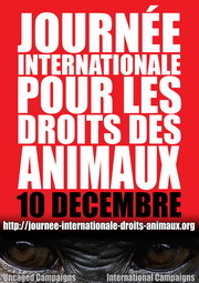 Journée internationale: Droits des animaux, le 10.12.2010. Antivi10