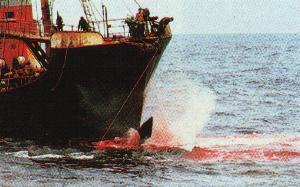 5 Nov 2010, Journée Mondiale Contre la Chasse à la Baleine Inv1010