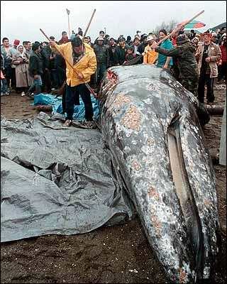 5 Nov 2010, Journée Mondiale Contre la Chasse à la Baleine Makah910