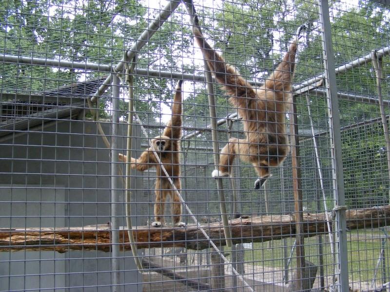 zoo du bois d 'attily Zoo_d_12
