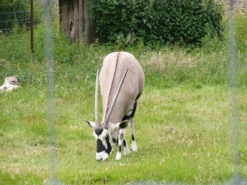 zoo du bois d 'attily Zoo_d_15