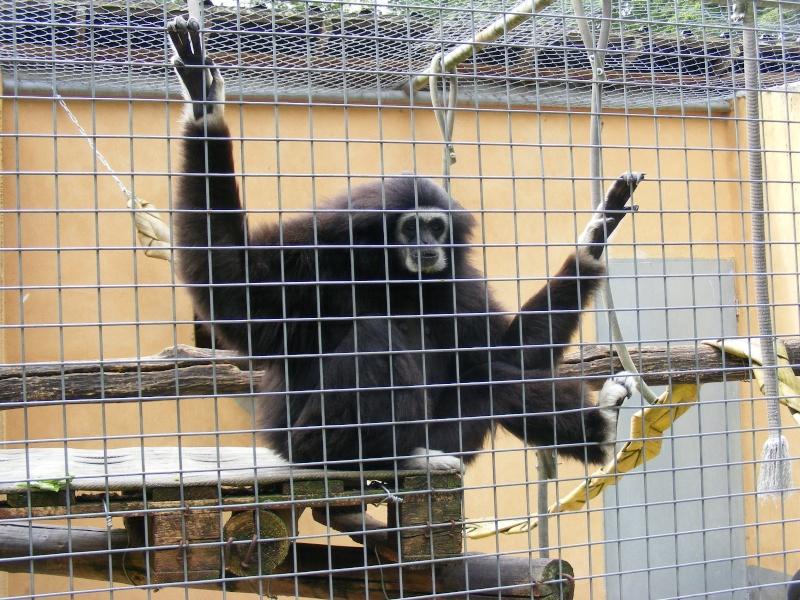 zoo du bois d 'attily Zoo_d_16