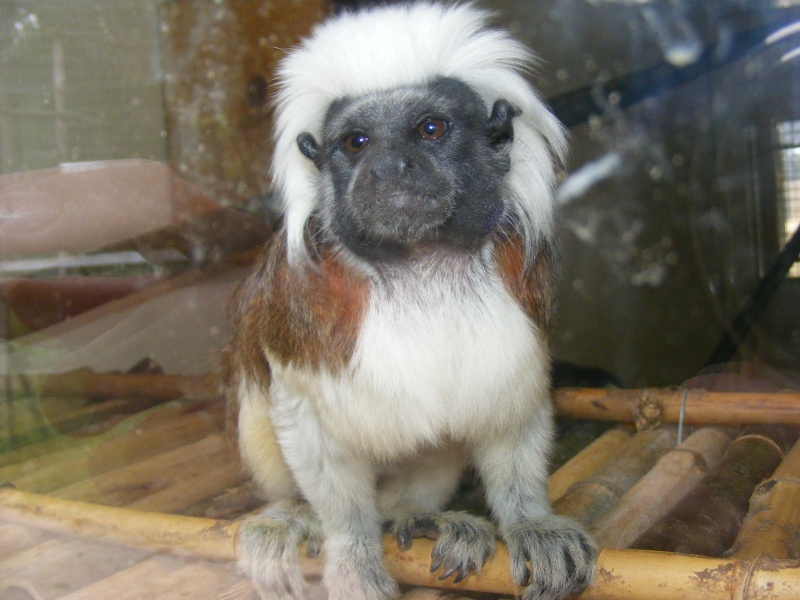 zoo du bois d 'attily Zoo_d_17