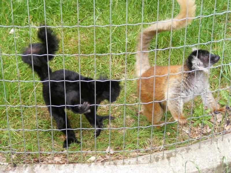 zoo du bois d 'attily Zoo_d_18