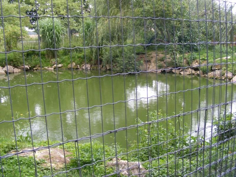 zoo du bois d 'attily Zoo_d_19