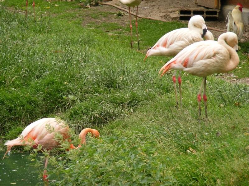 zoo du bois d 'attily Zoo_d_21