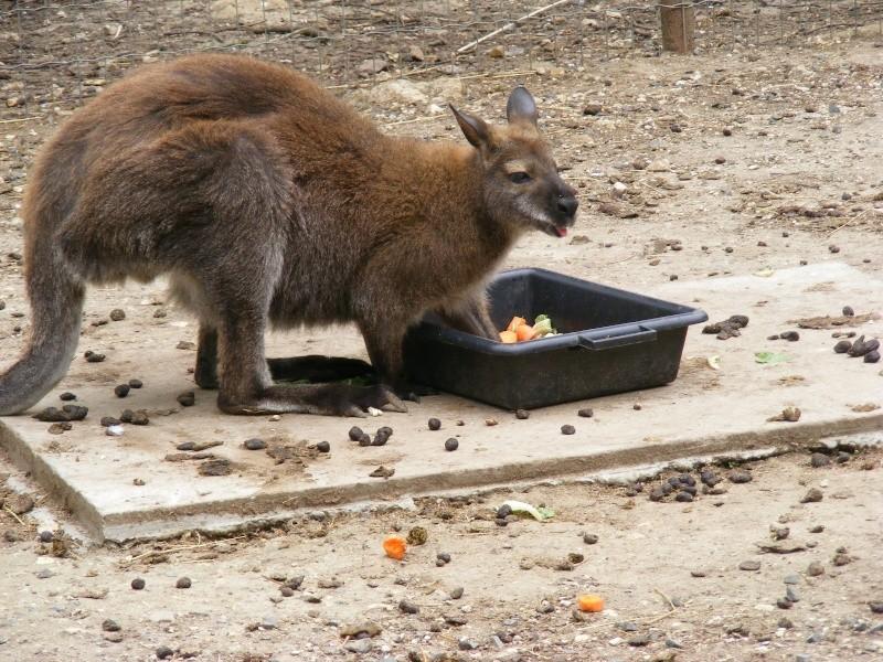 zoo du bois d 'attily Zoo_d_22