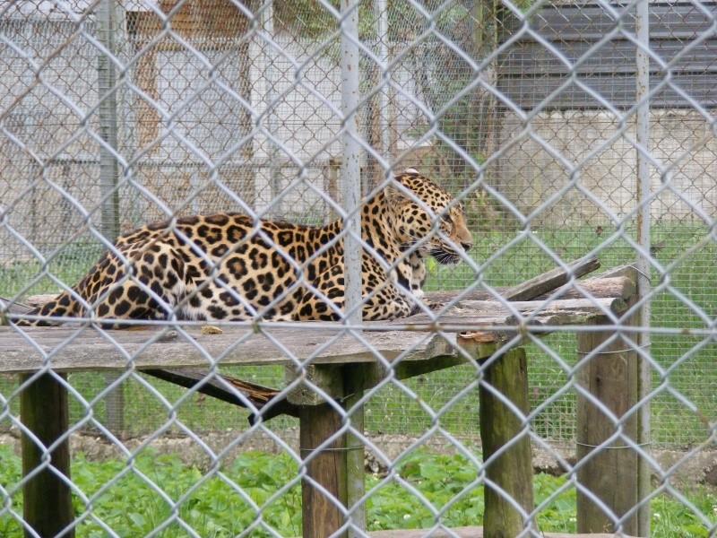 zoo du bois d 'attily Zoo_d_23