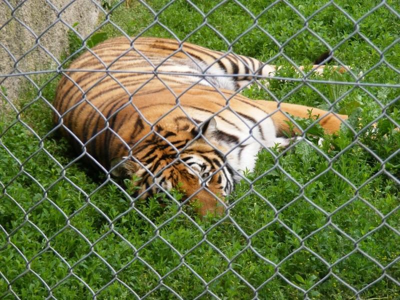 zoo du bois d 'attily Zoo_d_24