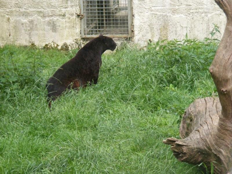 zoo du bois d 'attily Zoo_d_26