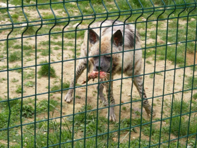 zoo du bois d 'attily Zoo_d_27