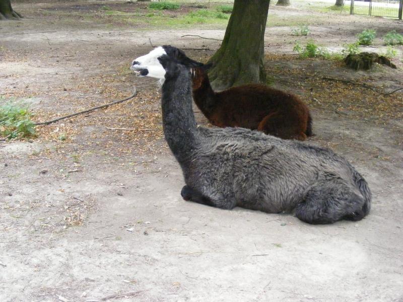 zoo du bois d 'attily Zoo_d_29