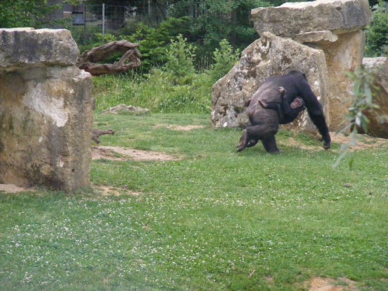 zoo du bois d 'attily Zoo_d_30
