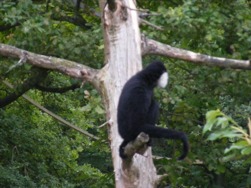 zoo du bois d 'attily Zoo_d_32