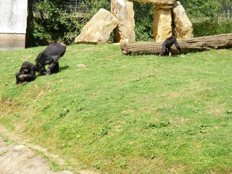 zoo du bois d 'attily Zoo_d_36