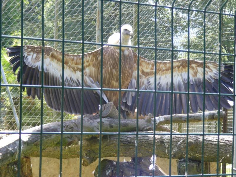 zoo du bois d 'attily Zoo_d_55