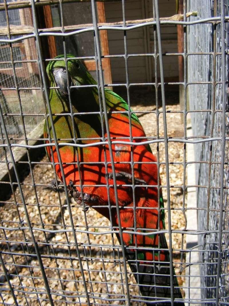 zoo du bois d 'attily Zoo_d_58