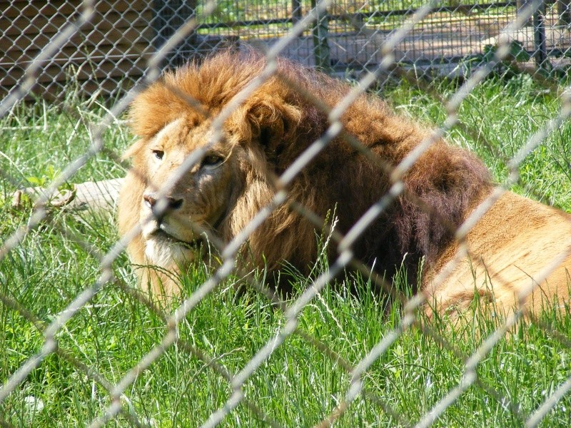 zoo du bois d 'attily Zoo_d_59
