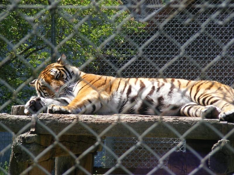zoo du bois d 'attily Zoo_d_60