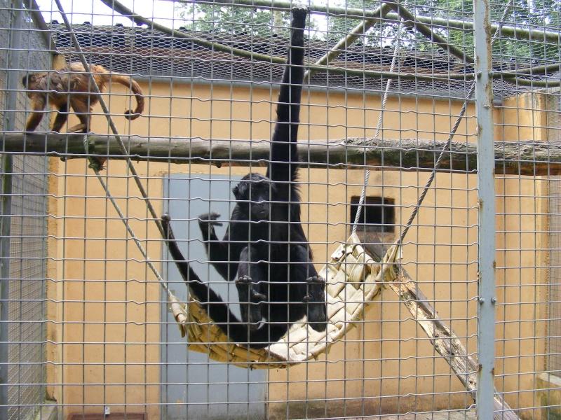 zoo du bois d 'attily Zoo_d_64