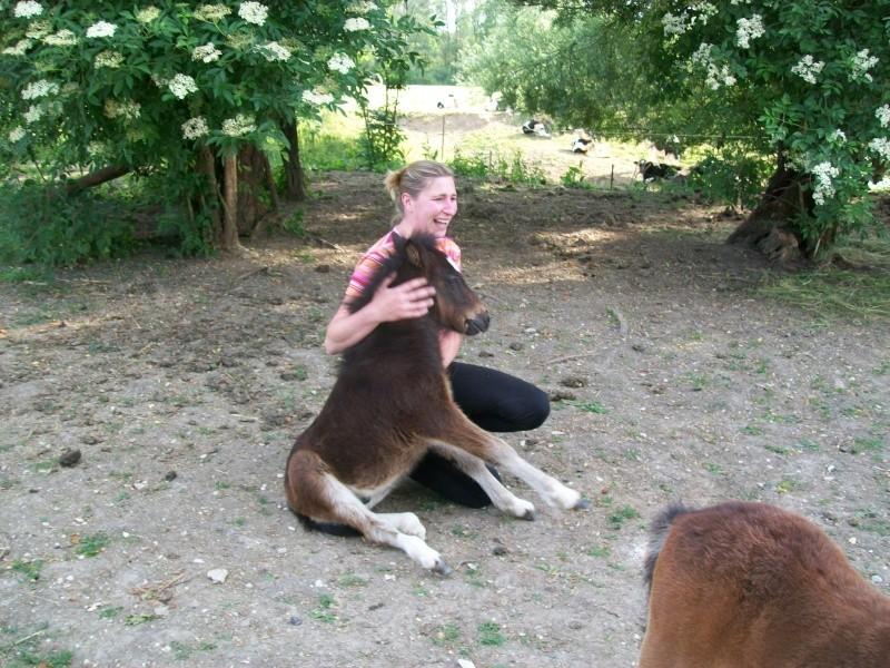 Avez-vous déjà vu un cheval qui s'assoit de peur ? Photo110