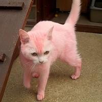 pink cat 8567b410