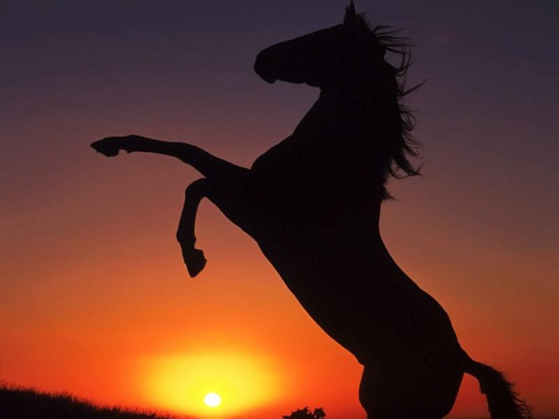 Les chevaux messagers « missionnés pour le réveil des hommes » Mcdkhb10