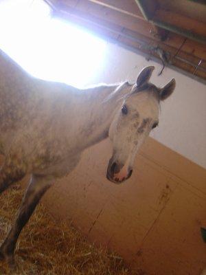 Problème avec les chevaux Osmose12