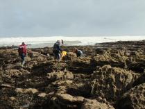 International Beach Clean up & PADI Project AWARE Dscf1915