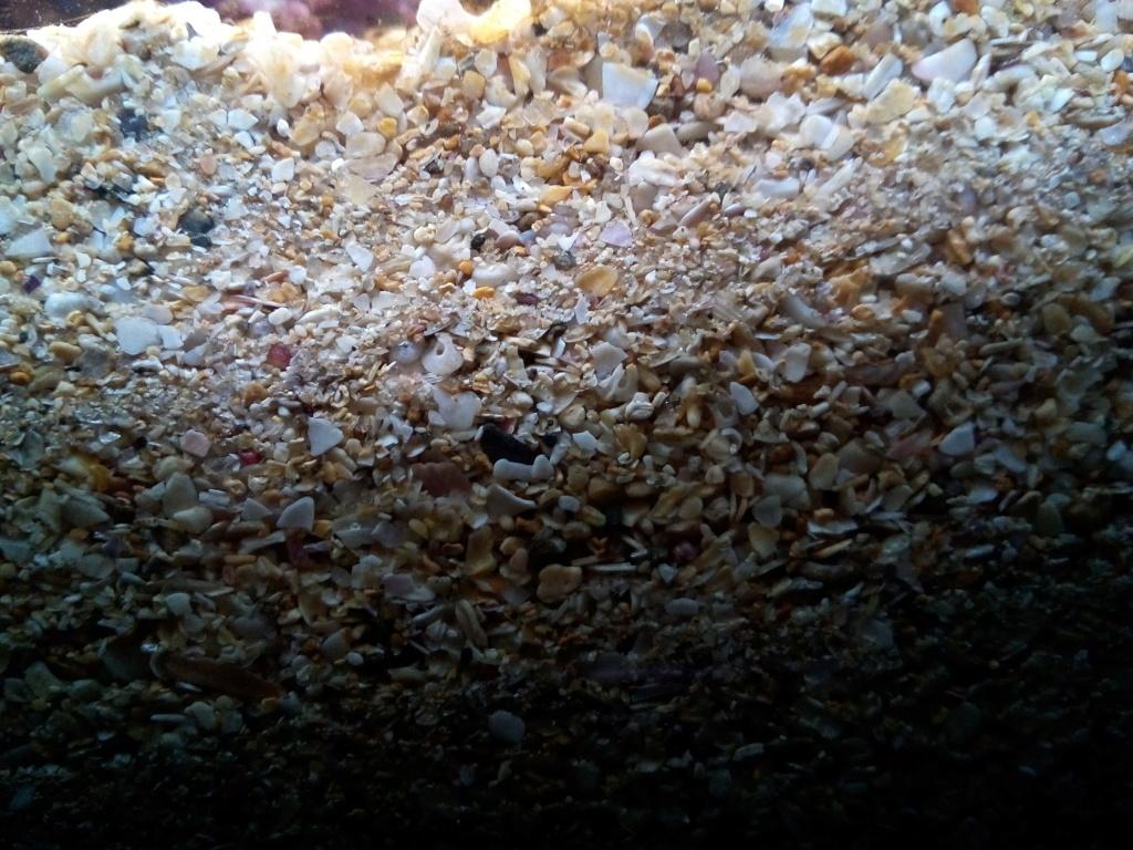 Sol et brassage fort Img_2011