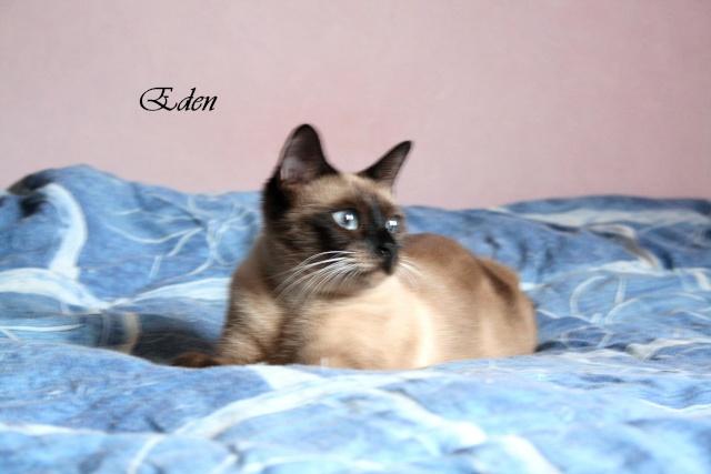 2 nouveaux chatons à la maison + photos d'Eden Eden10