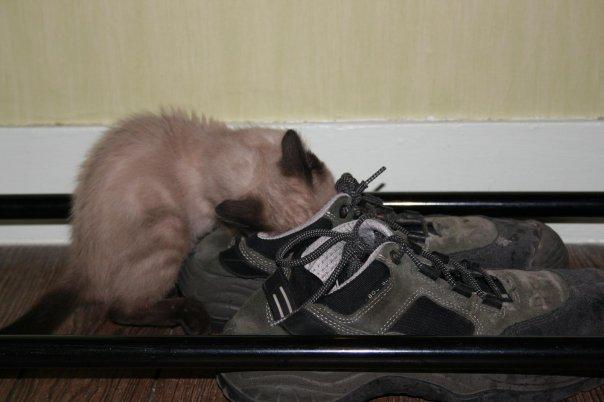 2 nouveaux chatons à la maison + photos d'Eden Eden_b11