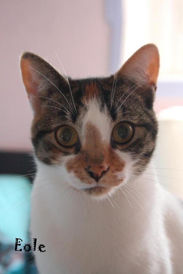 2 nouveaux chatons à la maison + photos d'Eden Eole10