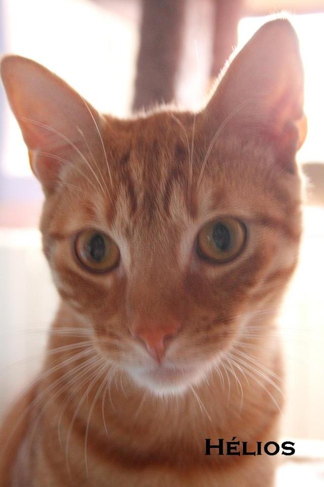 2 nouveaux chatons à la maison + photos d'Eden Halios10