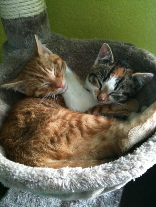 2 nouveaux chatons à la maison + photos d'Eden Img_0010