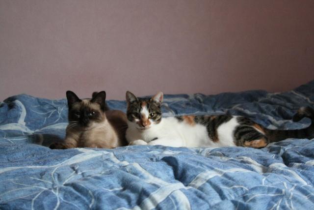 2 nouveaux chatons à la maison + photos d'Eden Img_8722