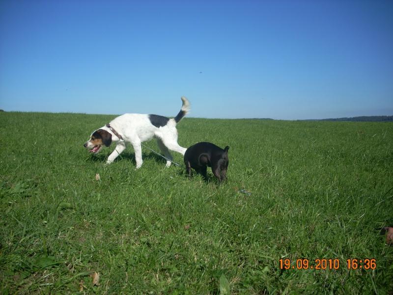 ADHOC, croisé beagle/griffon mâle, 5 ans 1/2 (56) - Page 2 Dscn0510
