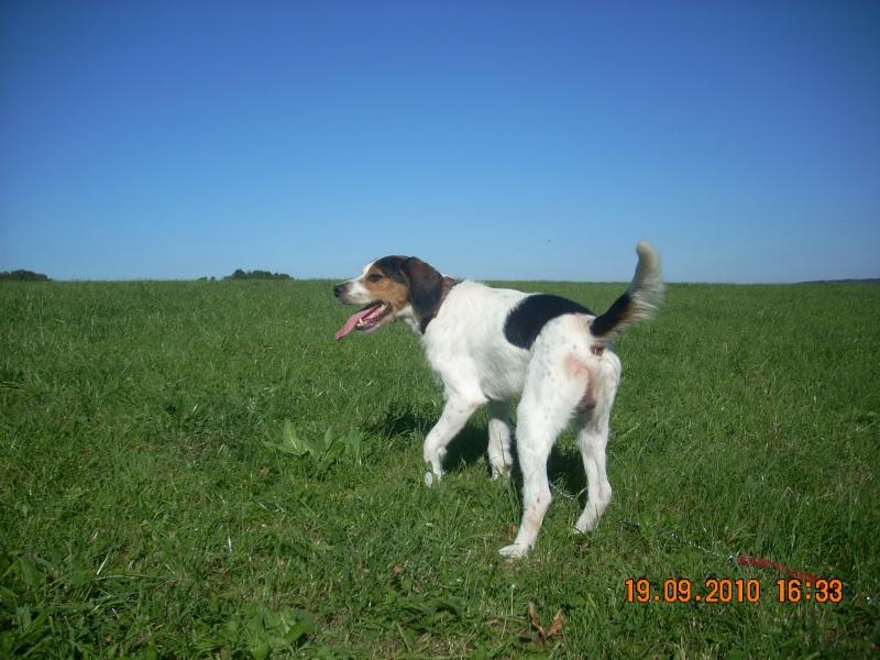 ADHOC, croisé beagle/griffon mâle, 5 ans 1/2 (56) - Page 2 Dscn0512