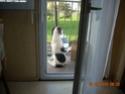 ADHOC, croisé beagle/griffon mâle, 5 ans 1/2 (56) - Page 2 Sylvie13